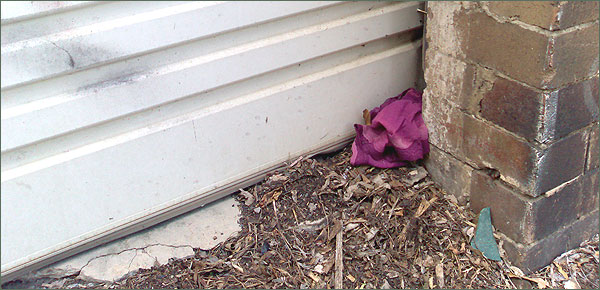 Photograph of purple knickers blown into a corner