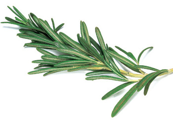 Photograph of a sprig of rosemary, for remembrance
