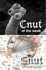 Photograph of a tapeworm, and a social media network diagram, as Cnuts of the Week