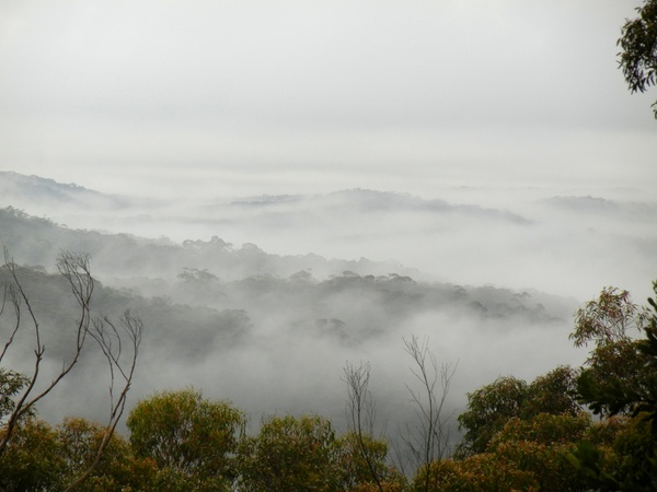 Fleeting mists: click to embiggen