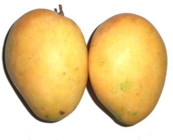 Mangoes by umstwit