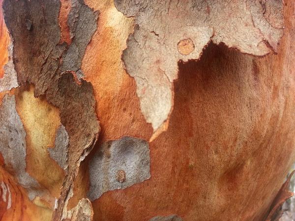 Eucalypt Bark 4: click to embiggen