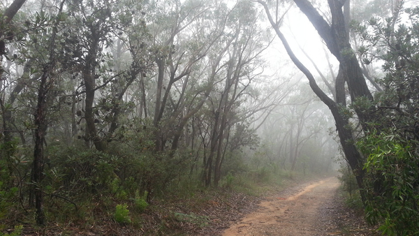 Bunjaree Cottages track in the mist: click to embiggen