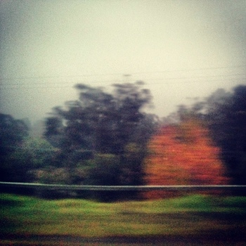 The train approaches Wentworth Falls: click to embiggen