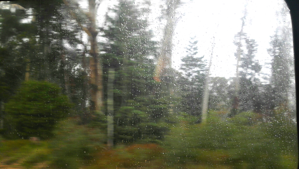 Forest, rain and train: click to embiggen