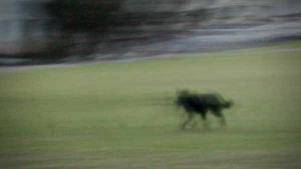 Black Dog Trot