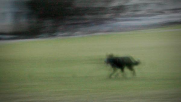 Black Dog Trot