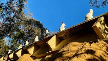 Sulphur-Crested Sentinels